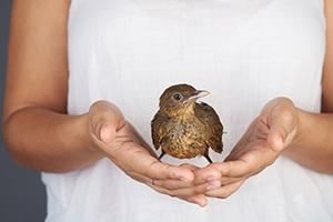 nabídky raného ptáka