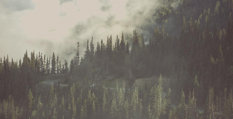 background-woods